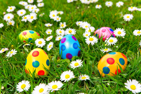 Colored painted easter eggs in green grass with  flowering white daisies Stock Photo