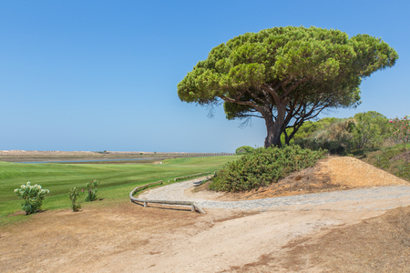 Portuguese landscape at coast  with pine tree