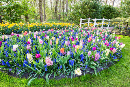 Mixed field of flowers with tulips hyacinths and white bridge Stock Photo