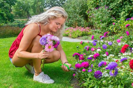 Young dutch woman prunes colorful summer flowers in backyard Standard-Bild