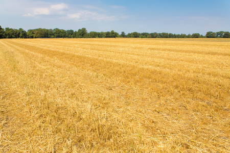 Empty harvested wheat field in the Netherlands Stock Photo