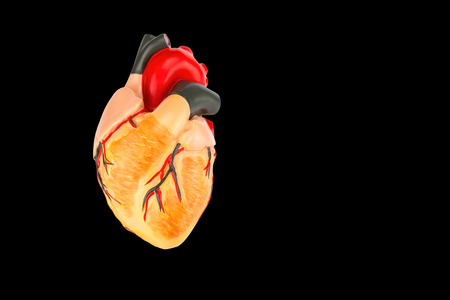 Model of human heart on black background Stock Photo