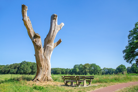 European landscape with dead tree bench and blue sky