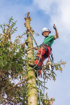 Caucasian tree expert climbs in top of fir tree trunk with sky