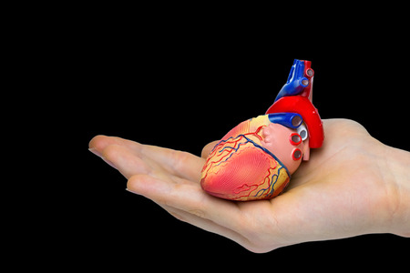Hand holding human heart isolated on black background