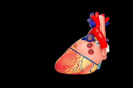 Human heart model isolated on black background Stock fotó