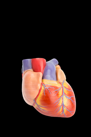 Plastic model of human heart isolated on black background