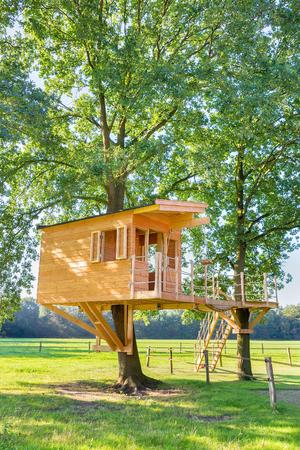 Neu gebaute holländische Holzbaumhütte in Eichen mit Wiese