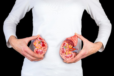 Mujer sosteniendo mitades de modelo de riñón en cuerpo blanco aislado sobre fondo negro Foto de archivo