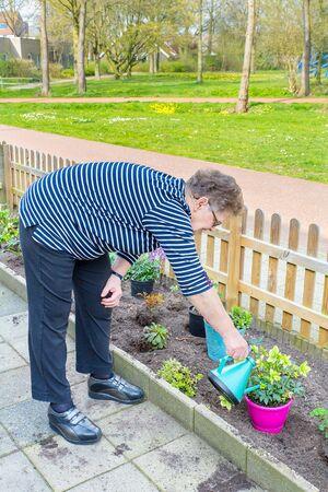 Ältere Holländerin, die Pflanze im Garten mit Gießkanne gießt
