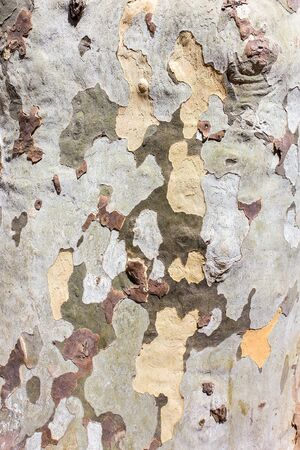 Close up tree trunk bark surface as background