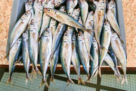 Many whole anchovies lying side by side in crate on portuguese market Фото со стока - 131026899