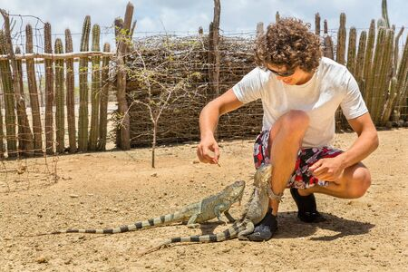 Young dutch man feeds two iguanas on ground in park Stockfoto