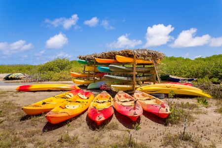 Many colorful kayaks ly in mangrove forest on Bonaire