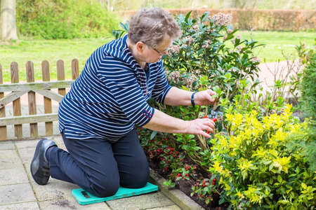 Elderly european woman prunes branch of plant in garden Reklamní fotografie