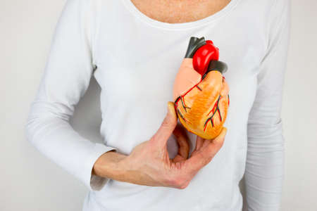 Female person holding human heart model on white body