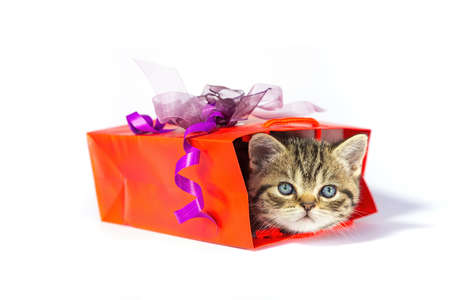 Young golden tabby cat hiding in red gift box isolated on white background