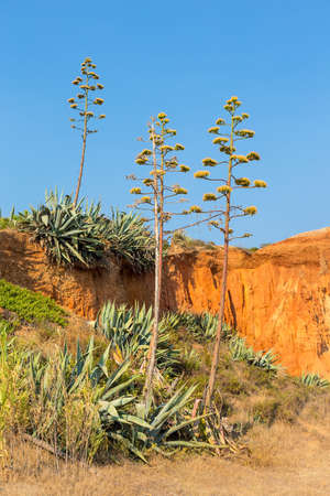 Landscape with Agaves at portuguese rocky mountain Reklamní fotografie