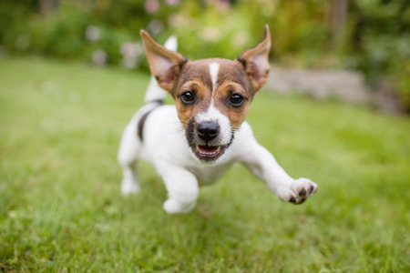 running nose: Happy Dog Stock Photo