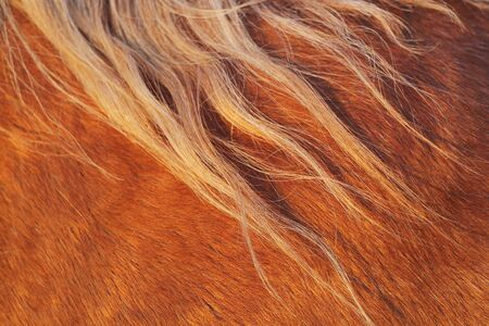 manes: Extreme close-up of the manes of a horse during sunset Stock Photo