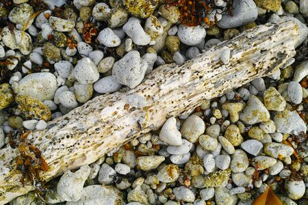 greem: Driftwood pebble texture