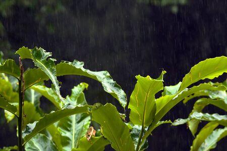 rainfall: Rainforest Rainfall