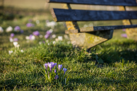 sidelight: relaxing Spring scenery
