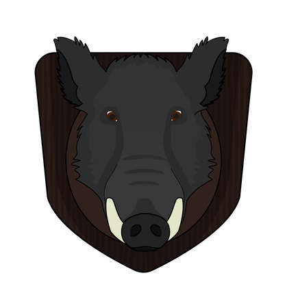 Hunting trophy. Stuffed taxidermy wild boar head with big tusks in wood shield. Color illustration isolated on white Vector