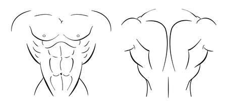 torso: Bodybuilder torso line-art illustration isolated on white