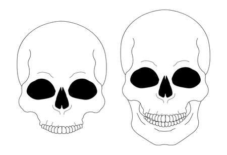 clip art: Le linee di contorno cranio vettore clip art illustrazione isolato su bianco