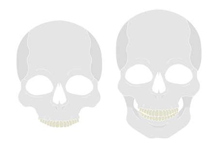 clip art: Colore bianco cranio ClipArt vettoriale illustrazione isolato su bianco Vettoriali