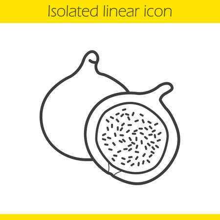 fig: Fig linear icon. Thin line illustration. Common fig fruit contour symbol. Vector isolated outline drawing Illustration