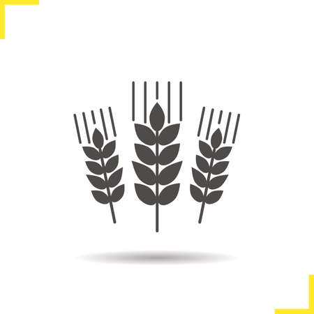 Wheat ears icon. Drop shadow barley silhouette symbol. Spikes of rye. Negative space. Vector isolated illustration Illustration