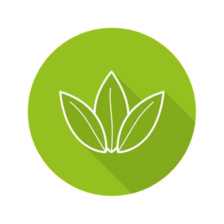 Tea leaves flat linear long shadow icon. Herbal medicine. Green tea shop emblem. Vector line symbol