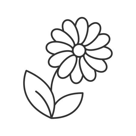 Camomile linear icon in thin line illustration. Flower contour symbol Vector isolated outline drawing