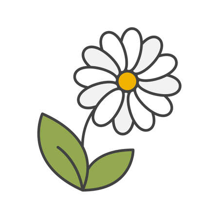 Camomile color icon. Isolated vector illustration 向量圖像