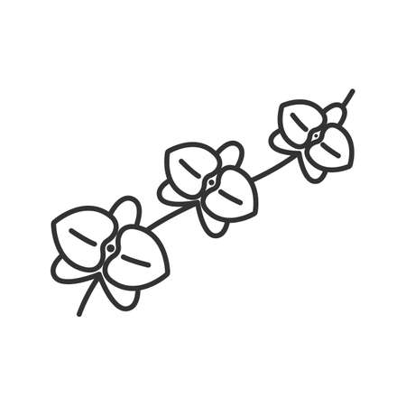 pacification: Orchid branch linear icon. Blooming flower thin line illustration. Exotic tropical plant contour symbol. Vector isolated outline drawing