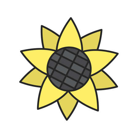 Sunflower head color icon. Isolated vector illustration