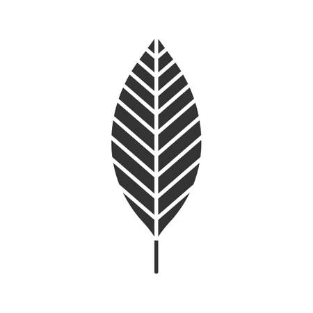 Walnut leaf glyph icon. Silhouette symbol. Forest tree leaf. Negative space. Vector isolated illustration  イラスト・ベクター素材