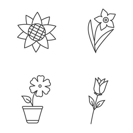 jonquil: Flowers linear icons set. Sunflower head, narcissus, hibiscus, rose isolated vector outline illustrations