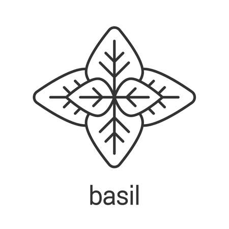 Basil linear icon. Thin line illustration. Flavoring, seasoning. Contour symbol. Vector isolated outline drawing
