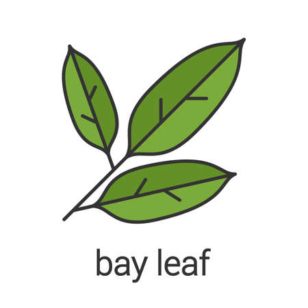 Bay leaf color icon. Isolated vector illustration Illustration