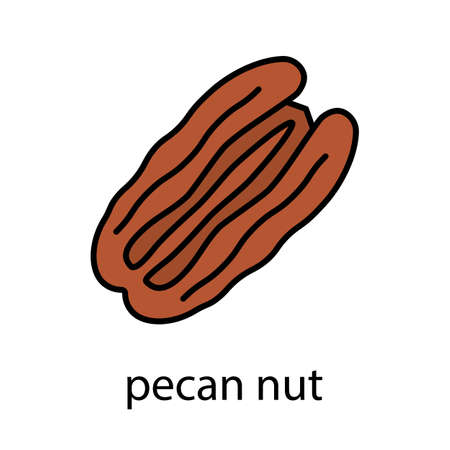Pecan nut color icon. Isolated vector illustration