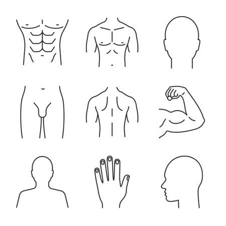 Male body parts on linear icons set. Head, hand, bicep, torso, back, buttocks, profile, groin. Thin line contour symbols. Isolated vector outline illustrations