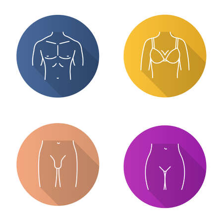 Human body parts flat linear long shadow icons set. Muscular man's chest, female breast, bikini zone, male groin. Vector outline illustration