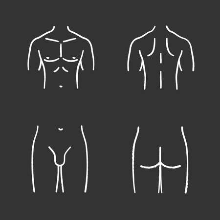 Male body parts chalk icons set. Muscular chest, back, groin, butt. Isolated vector chalkboard illustrations