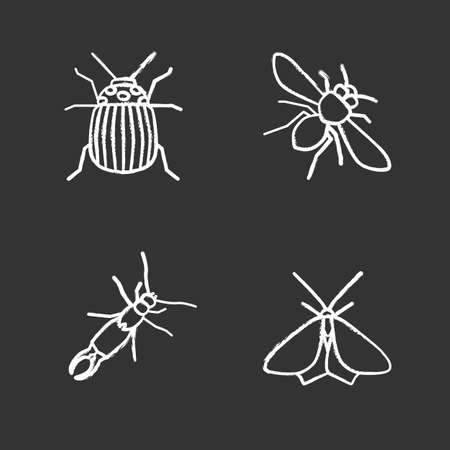 Insects chalk icons set of Colorado Isolated vector chalkboard illustrations Banque d'images - 96928671