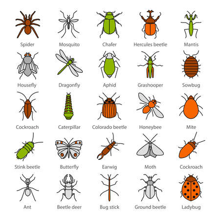 Insects color icons set. Bugs. Entomologist collection. Butterfly, earwig, stag bug, phasmid, moth, ant, mantis, spider. Isolated vector illustrations Illustration