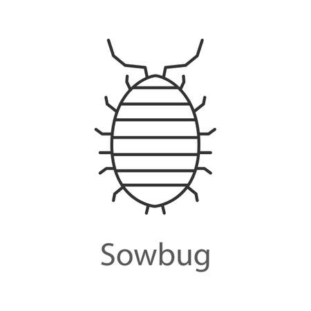 Woodlouse linear icon. Roll up bug Thin line illustration. Sowbug  Contour symbol  Vector isolated outline drawing