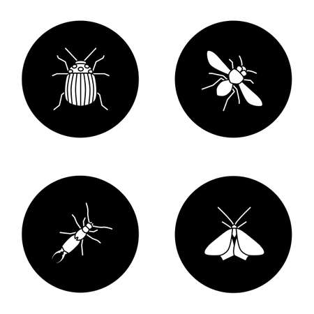 Insects glyph icons set. Colorado beetle, honey bee, earwig, moth. Vector white silhouettes illustrations in black circles 矢量图像